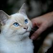 los gatos marcan su territorio - Feliway