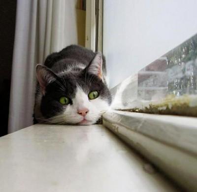 external image gato-en-la-nueva-casa-400x390.jpg