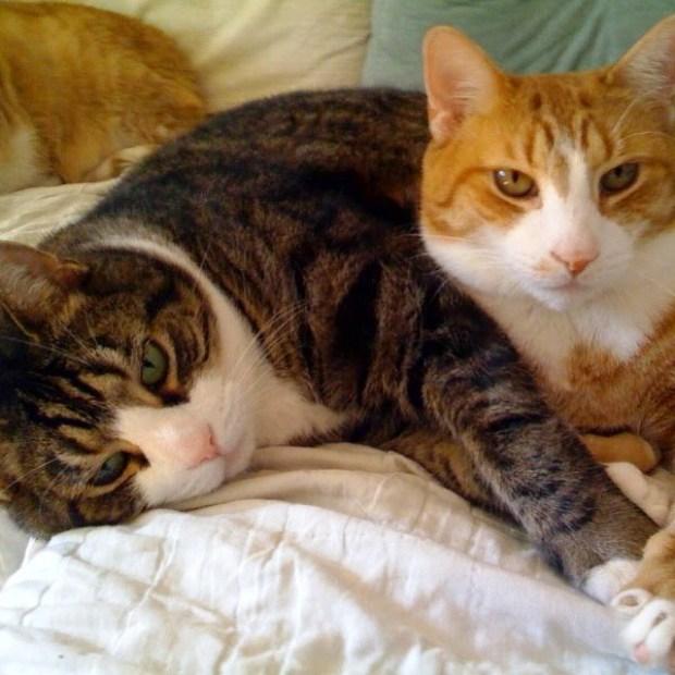 Cuando hay m s de un gato en casa feliway espa a - El gato en casa ...