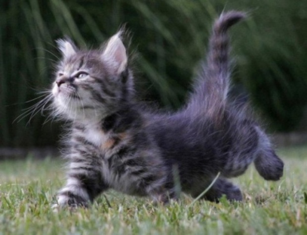 Hemos hablado en otro post de nuestro blog sobre las dotes ...: elsecretodelosgatosfelices.com/el-lenguaje-corporal-de-los-gatos