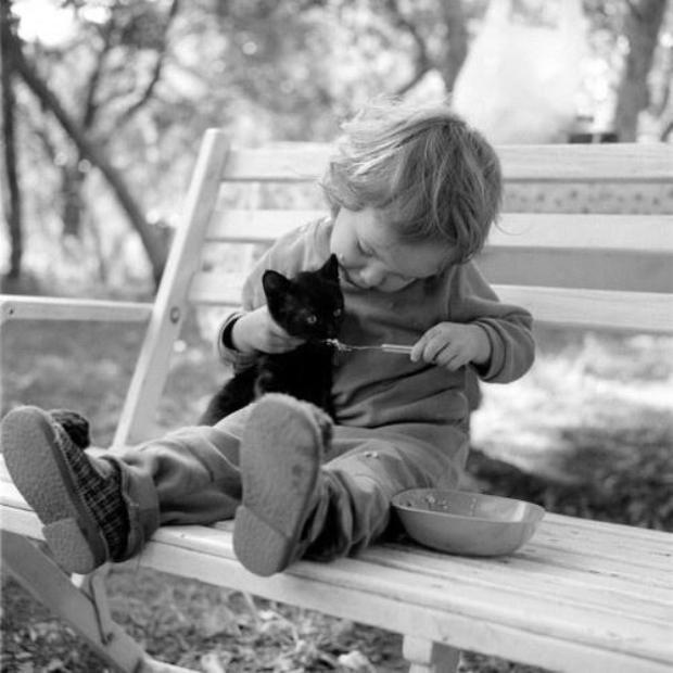 Gatos y bebés, ¿qué tal se llevan? | El secreto de los gatos felices