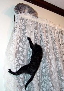Evita los castigos feliway espa a - Cortinas el gato preto ...